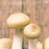 Mashroom old vintage retro style Royalty Free Stock Photography