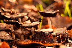 Mashrooms Στοκ Εικόνα