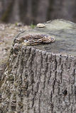 Mashrooms na drzewie Zdjęcie Stock