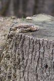 Mashrooms sull'albero Fotografia Stock