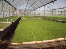 Mashtila för Shtilim växthusIsrael innovation arkivbilder