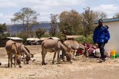 Masia workers. Masai life, masai workers in arusha tanzania stock photography
