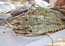 Masive king prawns fresh fish counter plated. Horizontal display at a fresh fish counter of massive giant king prawns on a silver platter, generic shot location Stock Photography