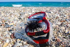 Mask for diving with sea urchin on Royalty Free Stock Images