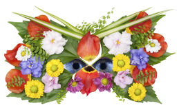 Mask and eyes of wild flower spring Stock Image