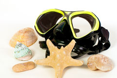 Mask for snorkeling and seashells Stock Images