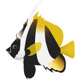 Masked banner fish Royalty Free Stock Images