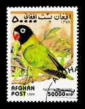 Masked Lovebird (Agapornis personatus), Parrots serie, circa 199. MOSCOW, RUSSIA - DECEMBER 21, 2017: A stamp printed in Afghanistan shows Masked Lovebird ( Royalty Free Stock Images