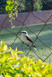 Bird perching on a fence Stock Images