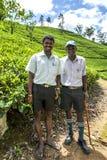 Maskeliya种植园Mousakellie庄园的监督员,在亚当斯峰顶附近在斯里兰卡 库存图片
