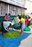 Maskeliya , Sri Lanka - 06 February, 2017: A group of tea pickers wait to have their morning harvest of leaves weighed by supervis. Maskeliya, Sri Lanka - 06 Stock Images