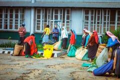 Maskeliya , Sri Lanka - 06 February, 2017: A group of tea pickers wait to have their morning harvest of leaves weighed by supervis. Maskeliya, Sri Lanka - 06 Stock Photos