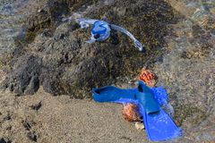 Masker met buis voor het snorkelen en vinnen en twee zeeschelpen Royalty-vrije Stock Afbeeldingen