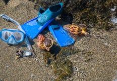 Masker met buis voor het snorkelen en vinnen en twee zeeschelpen op het overzeese strand Royalty-vrije Stock Foto's