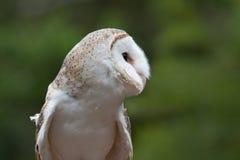 maskerad owl Arkivfoto