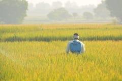 Maski, Karnataka, la India - diciembre 2,2017: Pesticida de rociadura del granjero en campo de arroz imagenes de archivo