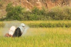 Maski, Karnataka, la India - diciembre 2,2017: Pesticida de rociadura del granjero en campo de arroz fotografía de archivo libre de regalías