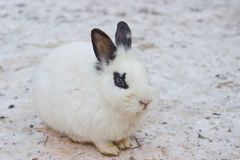 Masking white rabbit on the snow Stock Photos