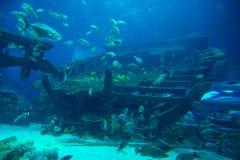Maskinrum av en skeppsbrott Arkivbild