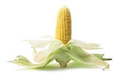 Maïskolf Stock Afbeelding