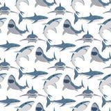 Maskot för djurliv för toothy för simning för vektorillustration ilsket för haj djurt för hav tecken för fisk undervattens- gulli vektor illustrationer