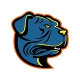 Maskot för Leavitt bulldogghuvud Royaltyfria Foton