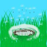 Maskros i det gröna gräset Arkivbild