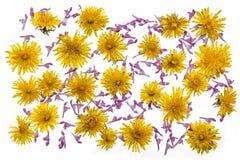 Maskros- och död-nässla blommor royaltyfria bilder