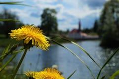 Maskros ovanför sjön royaltyfria foton