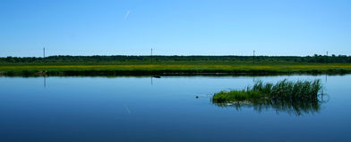 Maskros på bakgrunden av floden arkivbild