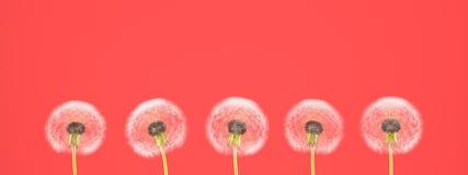 Maskros på färgrik bakgrund framförande 3d Royaltyfri Bild