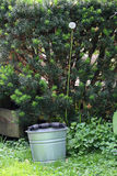 Maskros - Taraxacum Arkivbilder