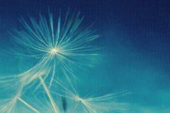 Maskrosen hoppa fallskärm vid vinden på en vit bakgrund Arkivbilder