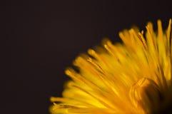 Maskrosen utplacerar Fotografering för Bildbyråer