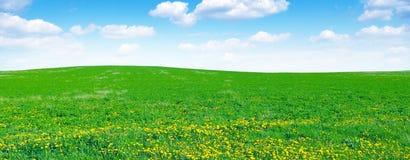 Maskrosfält och himmel royaltyfria foton