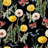Maskrosor äng blommar, fjärilen, vattenfärg, mönstrar sömlöst Arkivbild