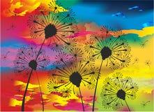 Maskrosor och solnedgång stock illustrationer