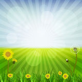 Maskrosor på våren stock illustrationer