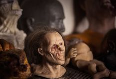 Masks and dummies on a shelf. In prosthetic special fx workshop stock photos