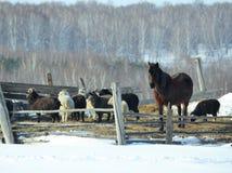 Maso dell'azienda agricola Fotografia Stock Libera da Diritti