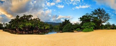 Masoala beach jungle Royalty Free Stock Photo