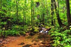 Masoala-Dschungelfluß lizenzfreies stockfoto