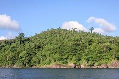 Masoala forest Royalty Free Stock Images