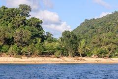 Masoala forest Royalty Free Stock Photos