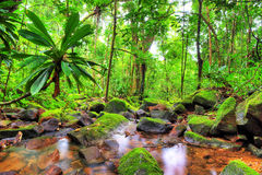 Masoala green jungle Royalty Free Stock Photos