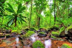 Masoala green jungle Royalty Free Stock Photos