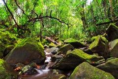Masoala jungle Stock Photos