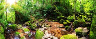 Masoala jungle panorama Stock Photography