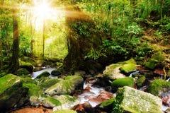 Masoala-Sonnendschungel lizenzfreie stockfotografie