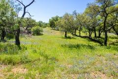 Mason Τέξας Wildflowers στοκ φωτογραφία με δικαίωμα ελεύθερης χρήσης